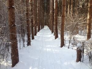 Ski woods